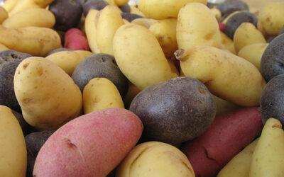 Herbed Yukon Gold Potatoes