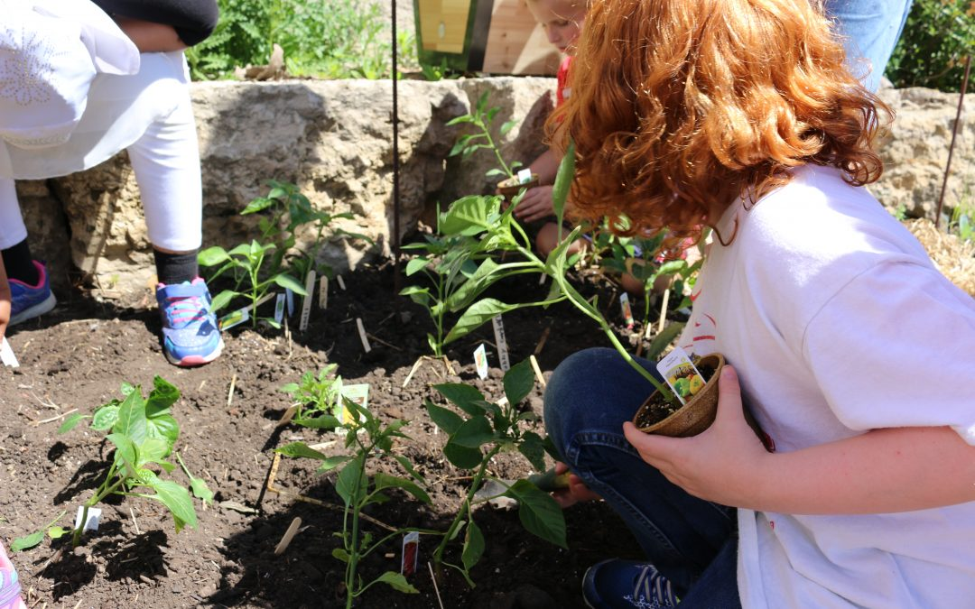 Our Top Five Tips for Gardening with Kids